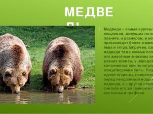 МЕДВЕДЬ Медведи – самые крупные из хищников, живущих на нашей планете, и разм