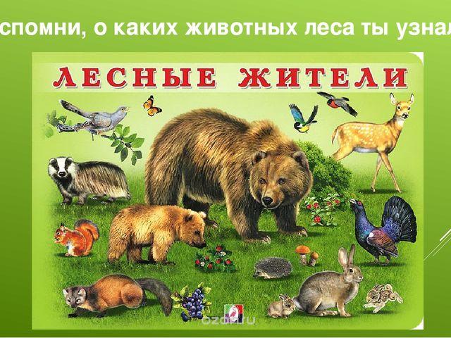 Вспомни, о каких животных леса ты узнал?