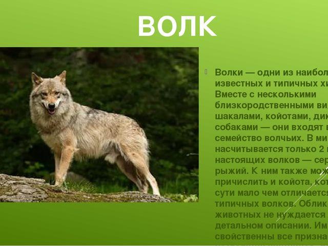ВОЛК Волки — одни из наиболее известных и типичных хищников. Вместе с несколь...
