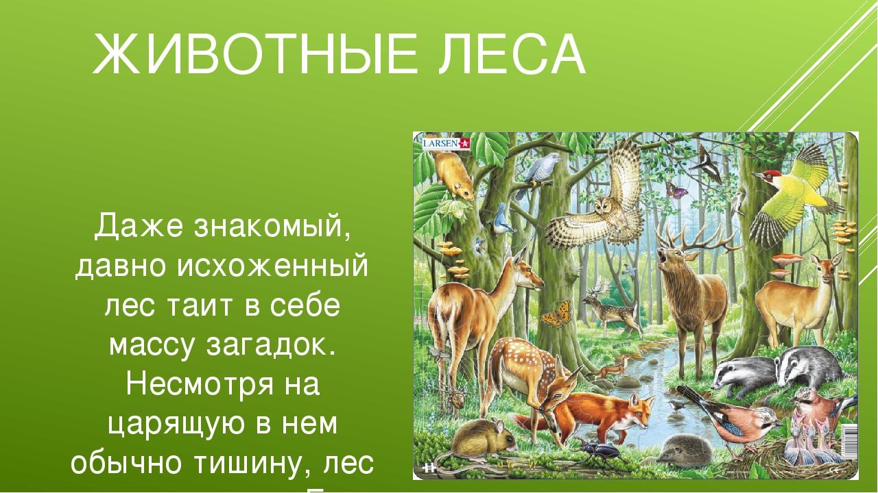 ЖИВОТНЫЕ ЛЕСА Даже знакомый, давно исхоженный лес таит в себе массу загадок....