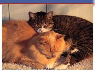 На Руси кошку считали символом тепла и уюта. Её называли хозяйкой дома, поэт