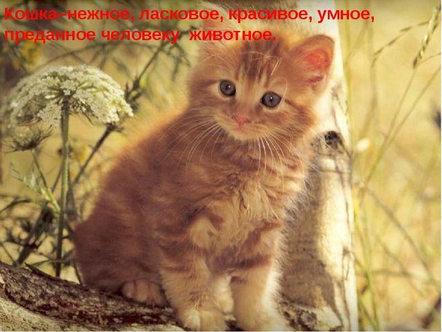 Кошка–нежное, ласковое, красивое, умное, преданное человеку животное.
