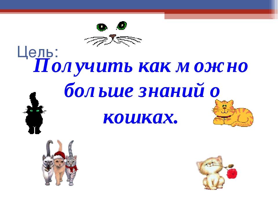 Цель: Получить как можно больше знаний о кошках.