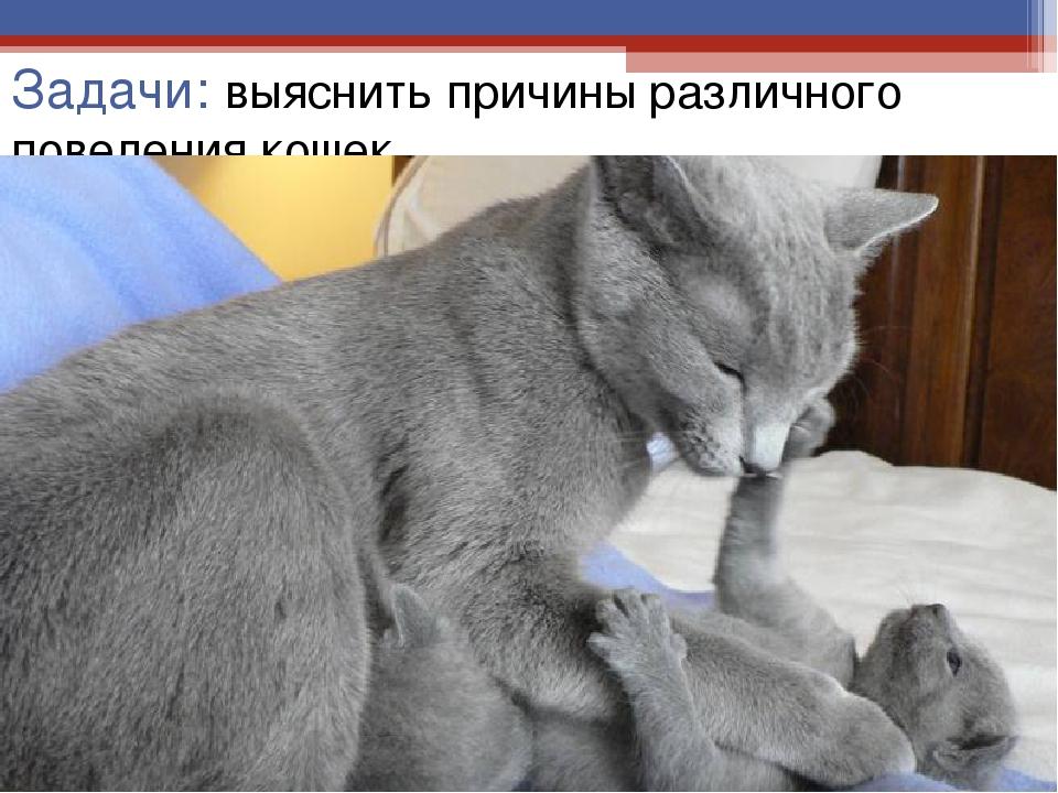 Задачи: выяснить причины различного поведения кошек.