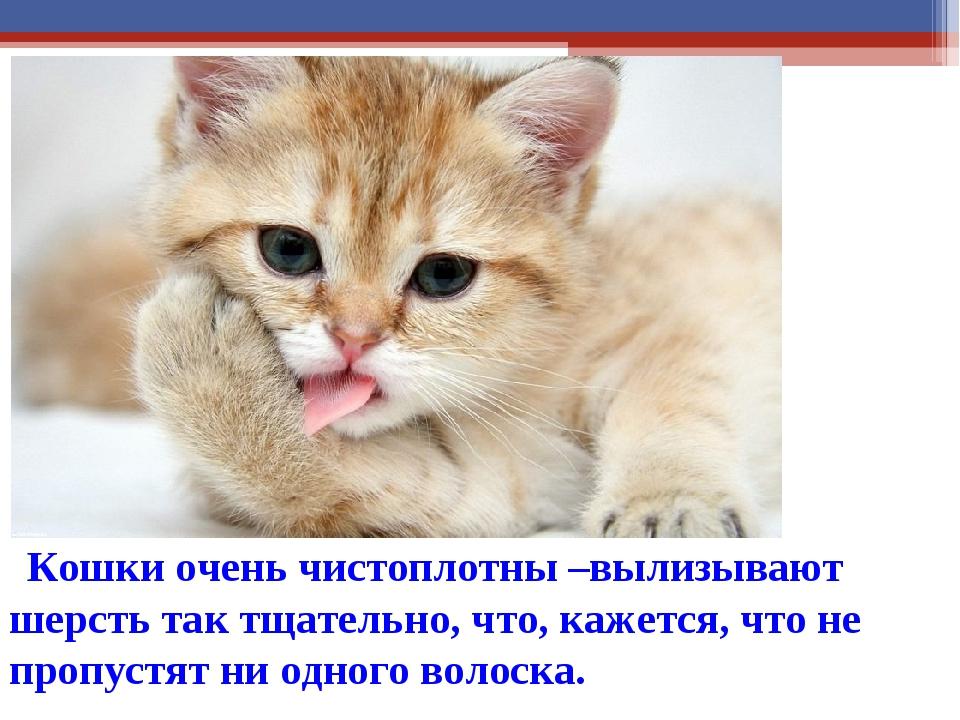 Кошки очень чистоплотны –вылизывают шерсть так тщательно, что, кажется, что...