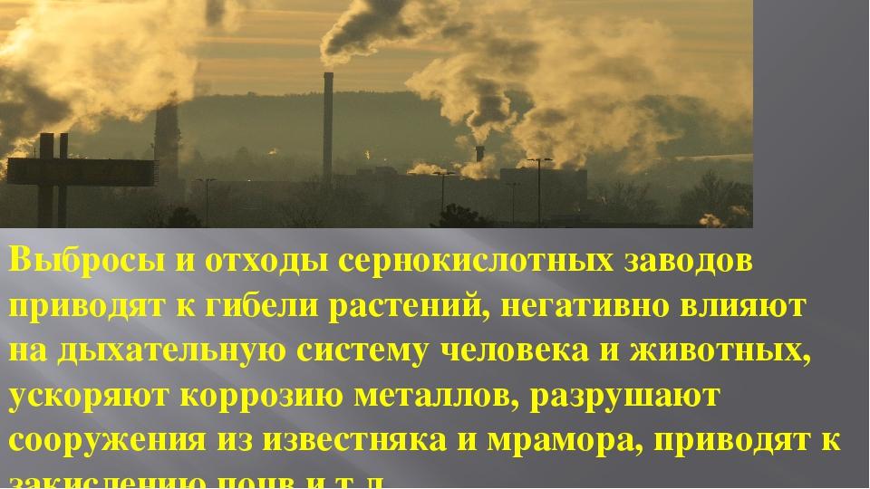 Выбросы и отходы сернокислотных заводов приводят к гибели растений, негативно...