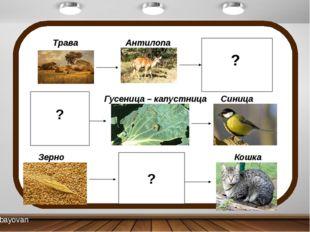 Трава Антилопа Лев Капуста Гусеница – капустница Синица Зерно Мышь Кошка ? ?