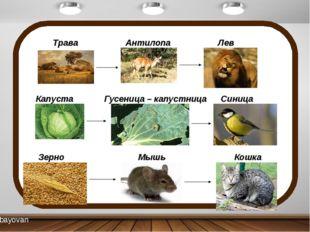 Трава Антилопа Лев Капуста Гусеница – капустница Синица Зерно Мышь Кошка bay