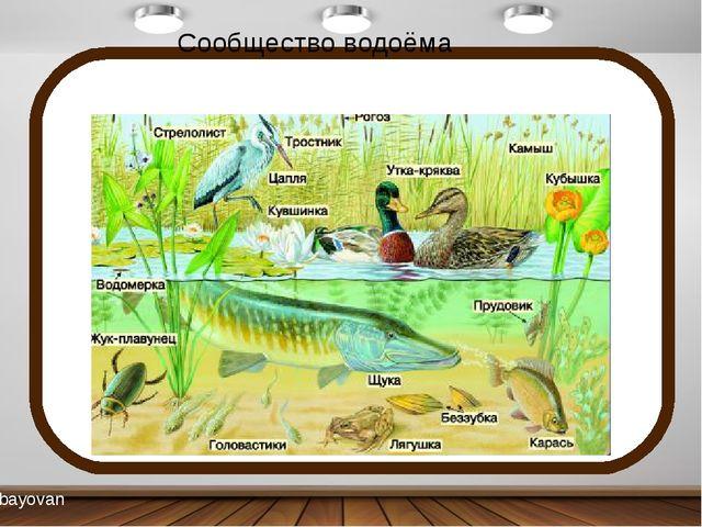 Сообщество водоёма bayovan