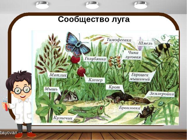 Сообщество луга bayovan