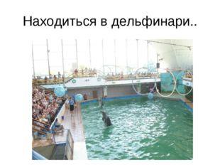 Находиться в дельфинари..