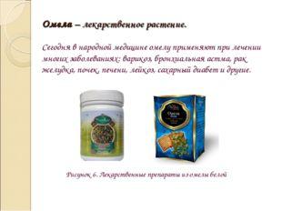 Омела – лекарственное растение. Сегодня в народной медицине омелу применяют п