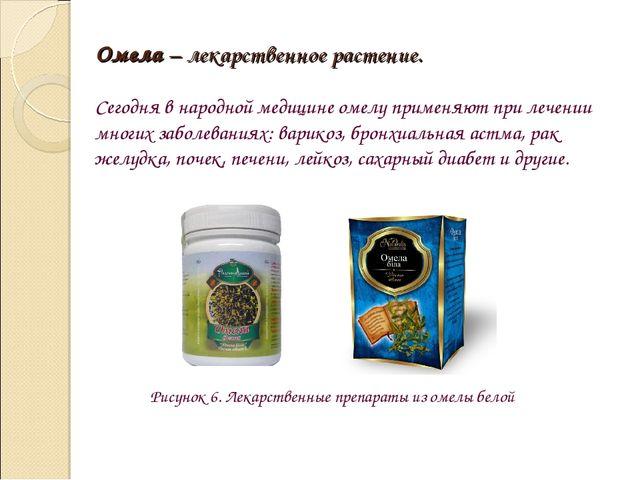 Омела – лекарственное растение. Сегодня в народной медицине омелу применяют п...