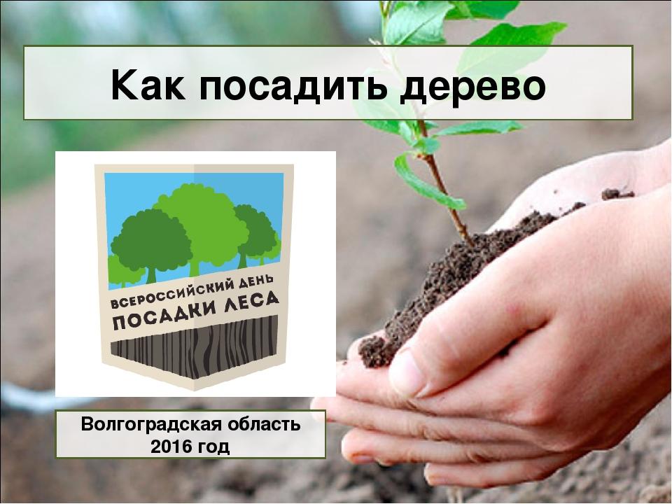Как посадить дерево Волгоградская область 2016 год