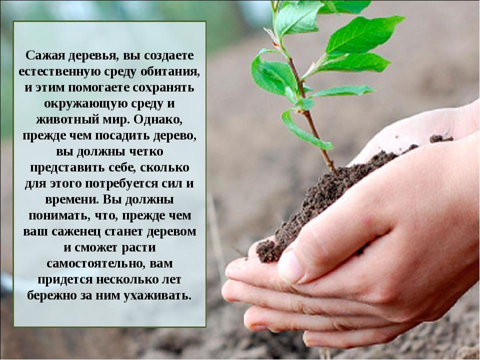 Сажая деревья, вы создаете естественную среду обитания, и этим помогаете сохр...