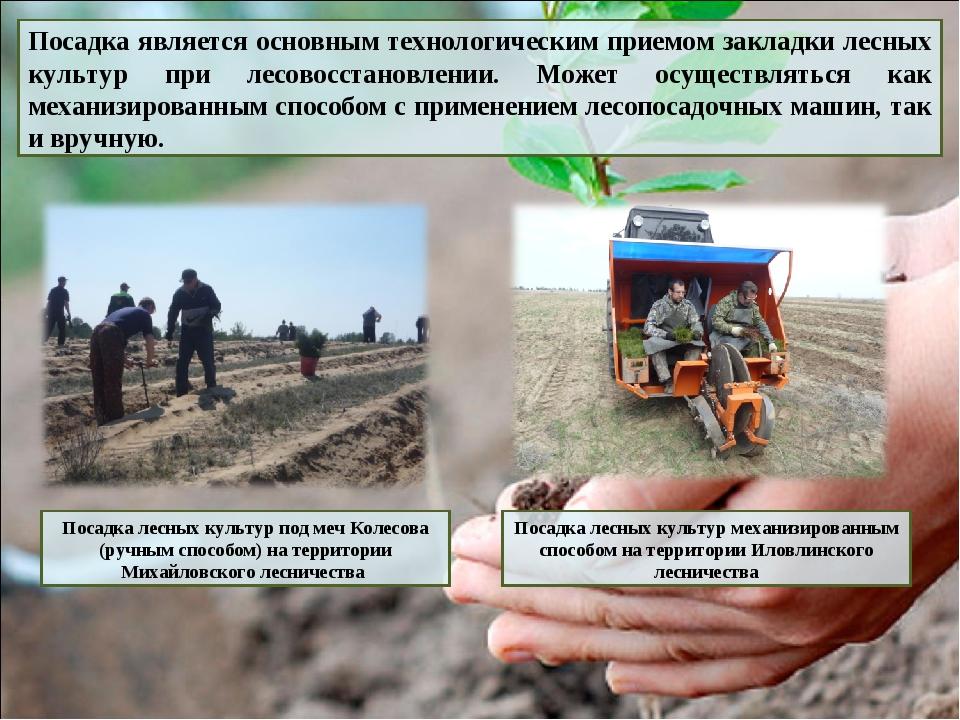 Методы выращивания леса 5