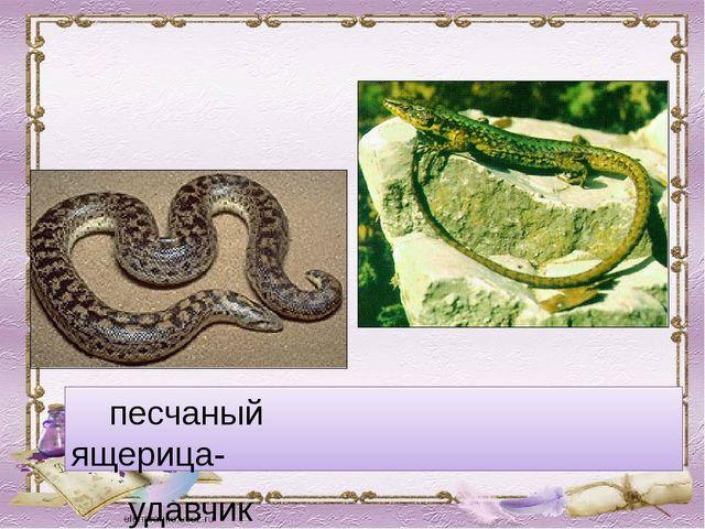 песчаный ящерица- удавчик круглоголовка
