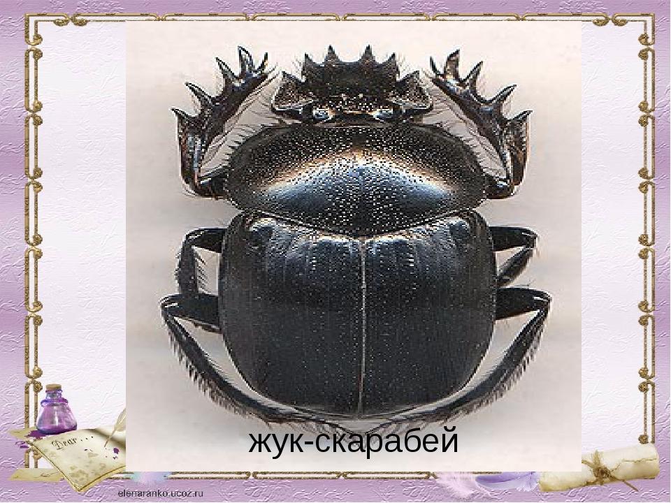 жук-скарабей