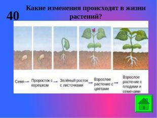20 Назовите органы растений. Корень Ствол Листья Цветок Плод Семена