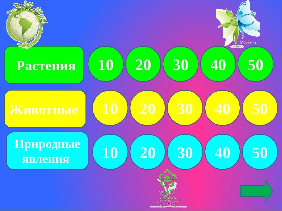 Растения Природные явления Животные 10 10 10 20 30 50 40 30 20 20 30 40 50 5...