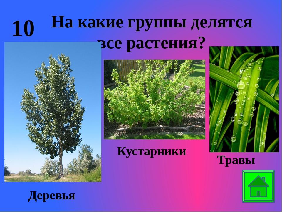 10 На какие группы делятся все растения? Деревья Кустарники Травы