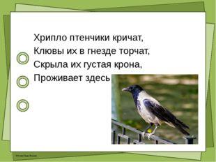 Хрипло птенчики кричат, Клювы их в гнезде торчат, Скрыла их густая крона, П