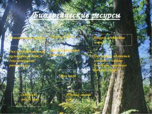 Биологические ресурсы Растительные ресурсы Они представлены как культурными,