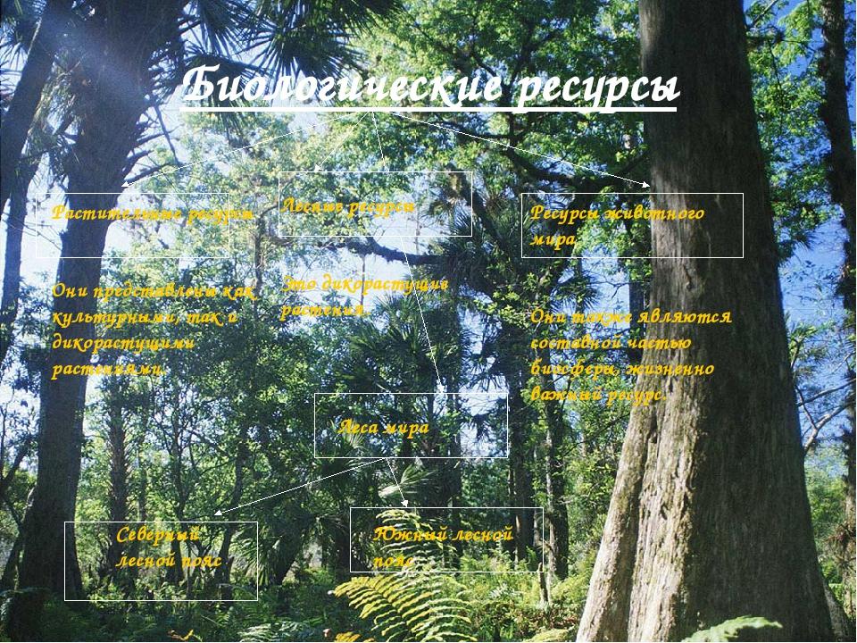 Биологические ресурсы Растительные ресурсы Они представлены как культурными,...