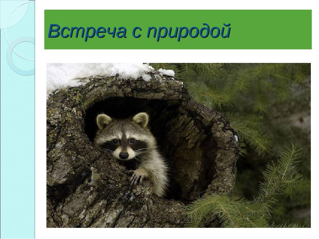 Встреча с природой