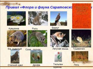 Привал «Флора и фауна Саратовской области » Кувшинка Беркут Рысь Тушканчик Ле