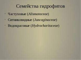 Семейства гидрофитов Частуховые (Alismataceae)  Ситниковидные (Juncaginacea