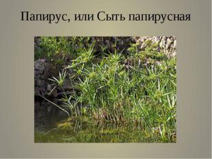 Папирус, или Сыть папирусная