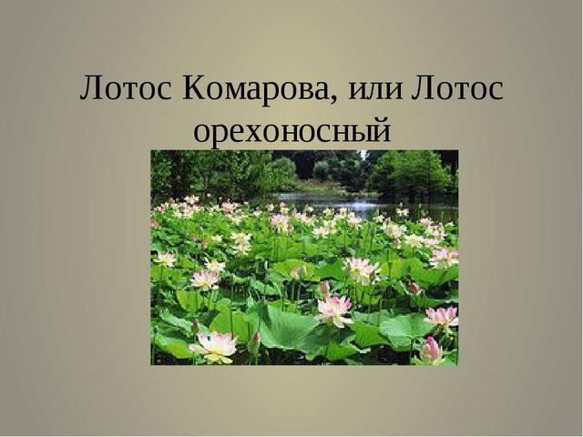Лотос Комарова, или Лотос орехоносный