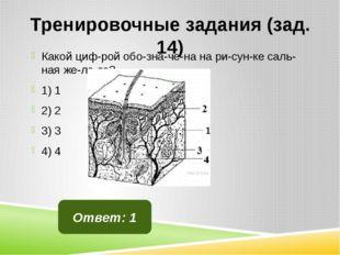 Тренировочные задания (зад. 14) Какой цифрой обозначена на рисунке саль