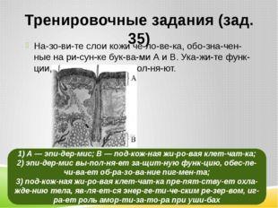 Тренировочные задания (зад. 35) Назовите слои кожи человека, обозначе