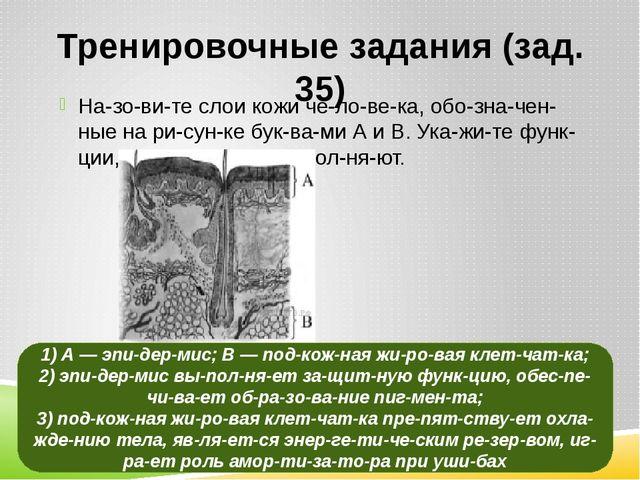 Тренировочные задания (зад. 35) Назовите слои кожи человека, обозначе...
