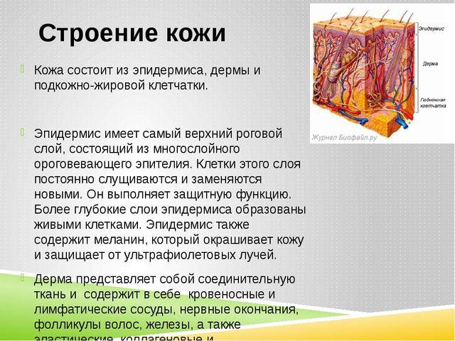 Строение кожи Кожа состоит из эпидермиса, дермы и подкожно-жировой клетчатки....