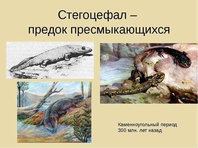 Стегоцефал – предок пресмыкающихся Каменноугольный период 300 млн. лет назад