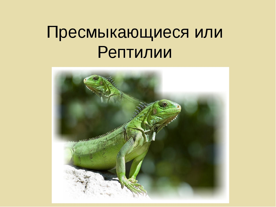 Пресмыкающиеся или Рептилии