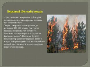 Верховой (беглый) пожар: характеризуются горением и быстрым продвижением огня