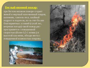 Беглый низовой пожар: при беглом низовом пожаре сгорает живой и мертвый напоч