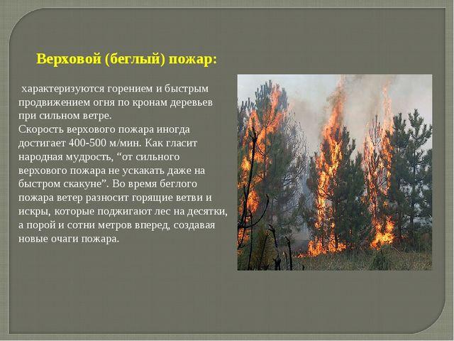 Верховой (беглый) пожар: характеризуются горением и быстрым продвижением огня...