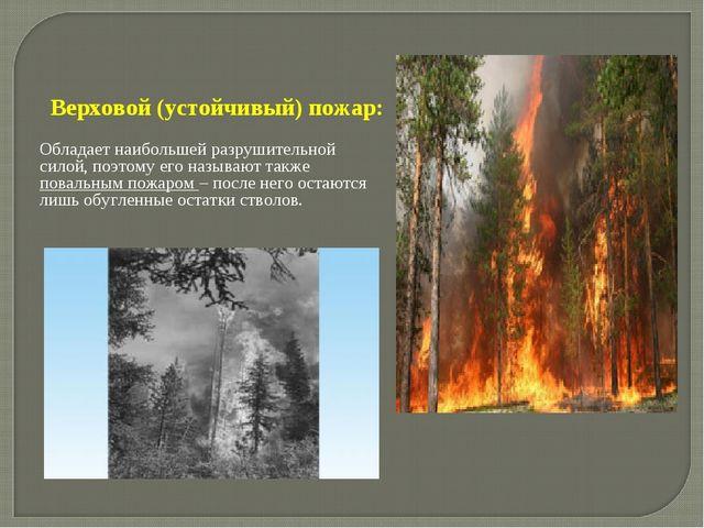 Верховой (устойчивый) пожар: Обладает наибольшей разрушительной силой, поэтом...
