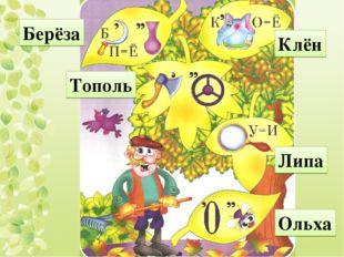 Берёза Тополь Клён Липа Ольха