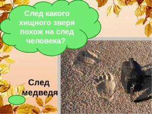 След медведя След какого хищного зверя похож на след человека?