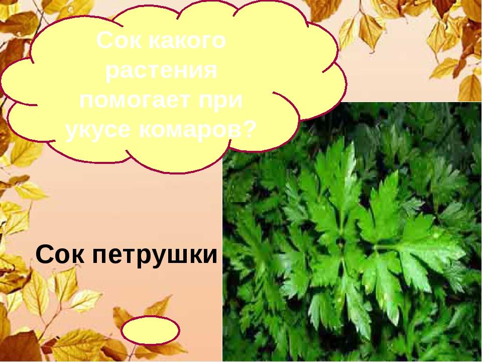 Сок петрушки Сок какого растения помогает при укусе комаров?