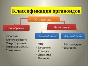 Классификация органоидов Органоиды Немембранные Мембранные Одномембранные Дву