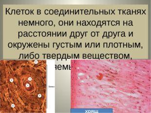 Клеток в соединительных тканях немного, они находятся на расстоянии друг от д