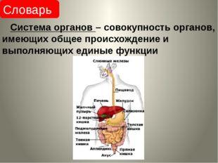 Система органов – совокупность органов, имеющих общее происхождение и выполн