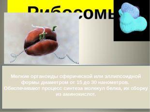 Рибосомы Мелкие органоиды сферической или эллипсоидной формы диаметром от 15